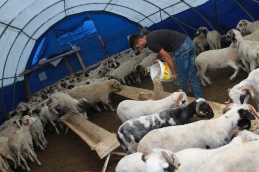 Her işin bir sırası var bu pazarda. Kendi karınlarını doyurmadan önce hayvanlarının karnını doyuruyor pazarcılar.