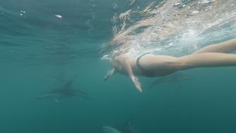 Adam Walker yunuslarla yüzüyor